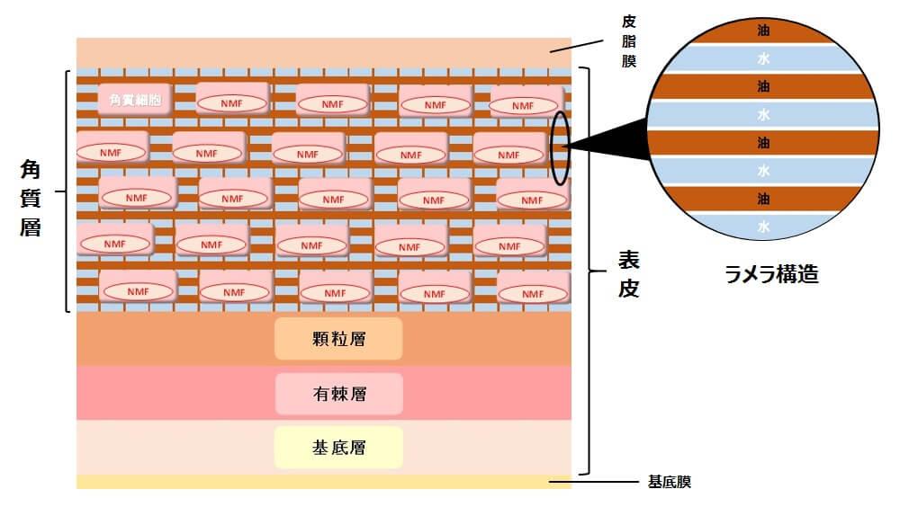 ラメラ構造の詳しい図