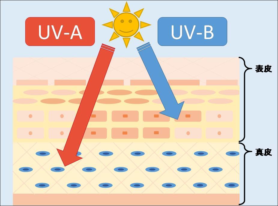 紫外線の種類(UVAとUVB)と働き