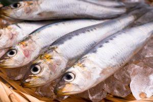 コラーゲンの由来である魚