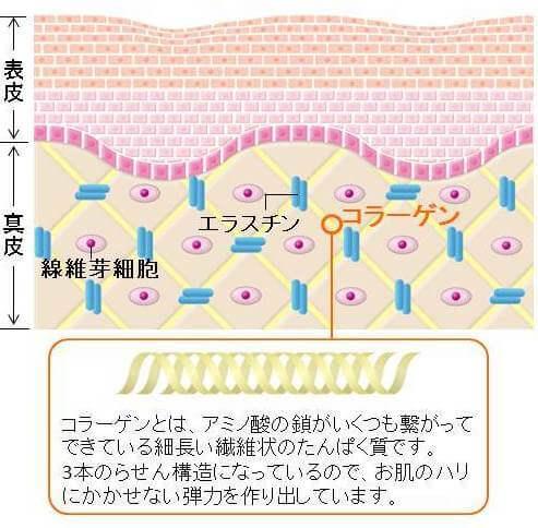 ハリと弾力に大きく関わるコラーゲンのイメージ