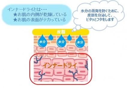 インナードライ肌の肌状態を表す図