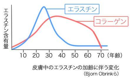 コラーゲンとエラスチンの加齢に伴う変化を示すグラフ
