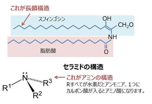 アミノ酸構造の図
