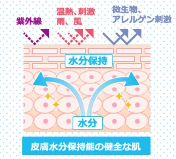 表皮のバリア機能の図