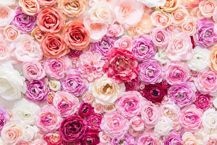 たくさんのダマスクローズの花