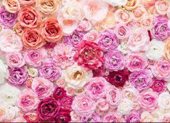 センチフォリアローズバラの花びら