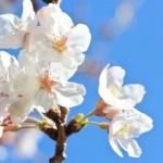 春っぽいイメージの画像
