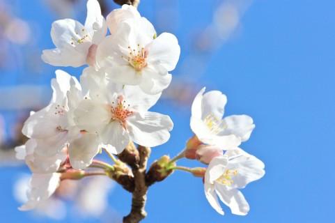 春の酵素洗顔のイメージ