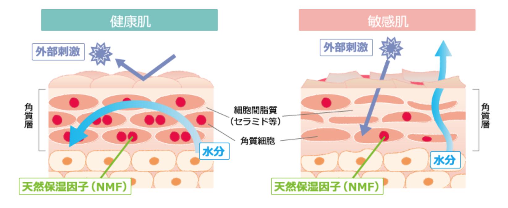 健康な肌と敏感肌の内部の違い