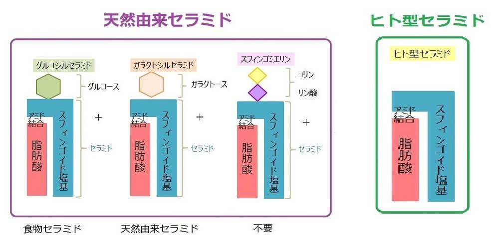 セラミドの構造図