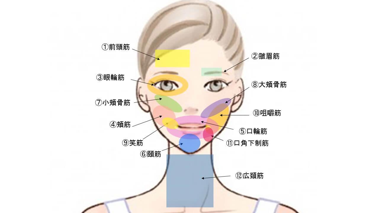 顔の表情筋の詳しいイラスト