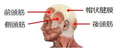 頭部の筋肉の部位を説明している図