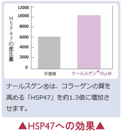 ナールスゲンのHSP47への効果