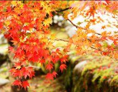 秋を連想させる作物