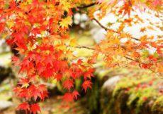 11月を連想させる紅葉