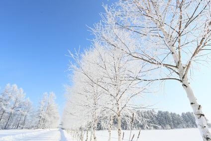 冬の乾燥のイメージ
