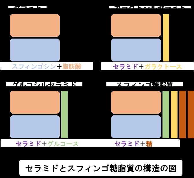 セラミドとスフィンゴ糖脂質の構造の図