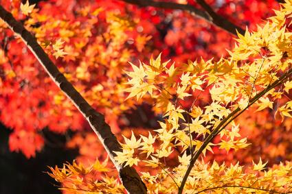秋を連想させる紅葉