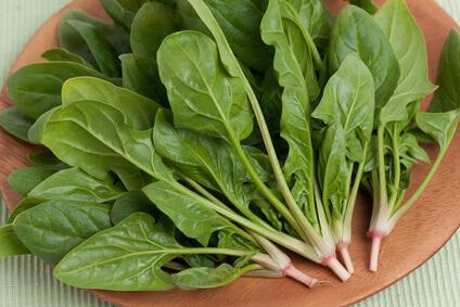 貧血を予防する野菜「ホウレン草」