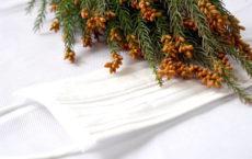 花粉症の原因の1つである杉
