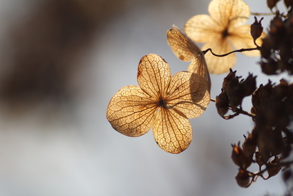 秋枯れ肌のイメージ