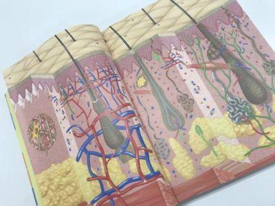 新しい皮膚科学で紹介されている皮膚断面図