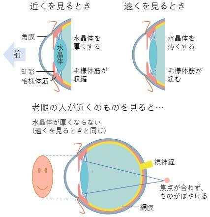 老眼の仕組み