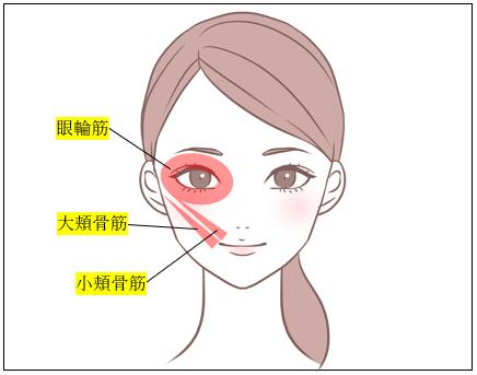 眼輪筋、大頬骨筋、小頬骨筋のイラスト