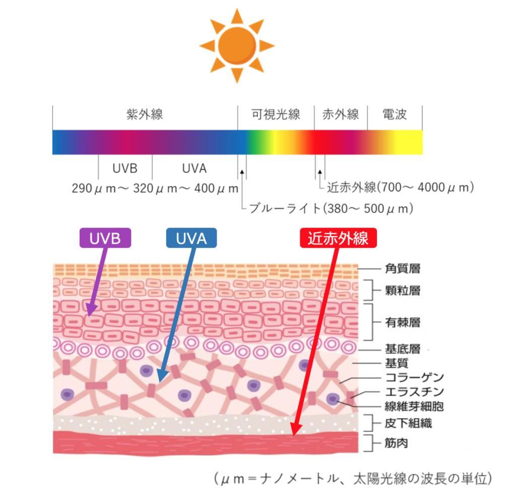 皮膚に及ぼす太陽光線の影響のイラスト