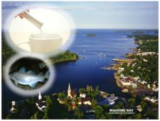 カナダの海と100%天然海水魚とマリンコラーゲン