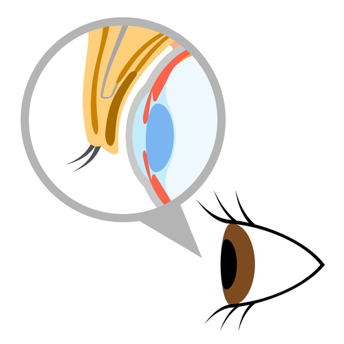 瞼の構造と仕組み