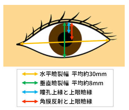 眼裂の測定