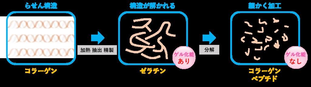 コラーゲン・ゼラチン・コラーゲンペプチドの関係を表す図