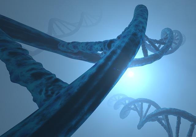 グリシンに変換する酵素をつくるSHMT2遺伝子のイメージ