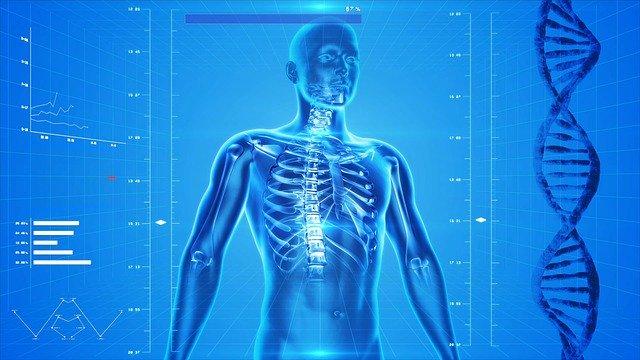 グリシンは人間の体の構成に重要な成分
