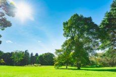 日光皮膚炎の原因となる強い紫外線