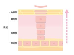 角質層のターンオーバーのイメージ