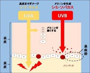 UVAとUVBの肌へ影響の違いを示す図