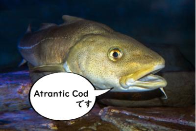 天然海水魚