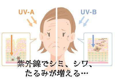 紫外線による肌老化のメカニズム